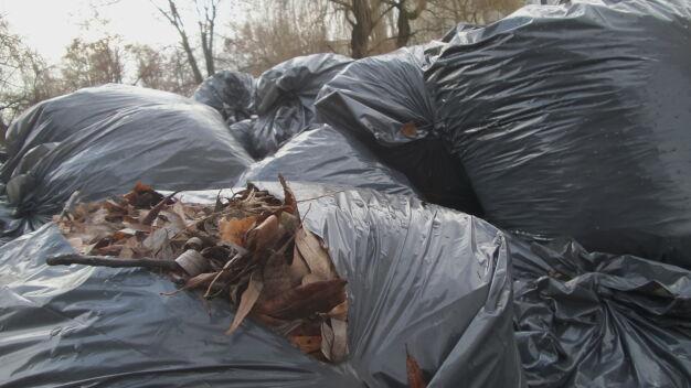 Zmiany w odbiorach śmieci. Trawę i liście wywiozą częściej