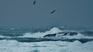 Silny wiatr na północy. Żółte alarmy IMGW