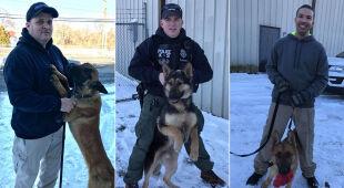 Psy policyjne z Newport przechodzą specjalistyczne szkolenia