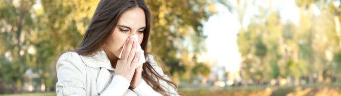 Na alergików czyhają Cladosporium i ambrozja