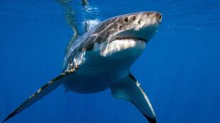 """""""To przerażające. Dwa przypadki w ciągu doby"""". Rekiny atakują"""