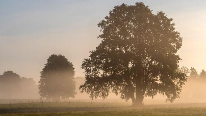 Uwaga, mgły ograniczają widzialność